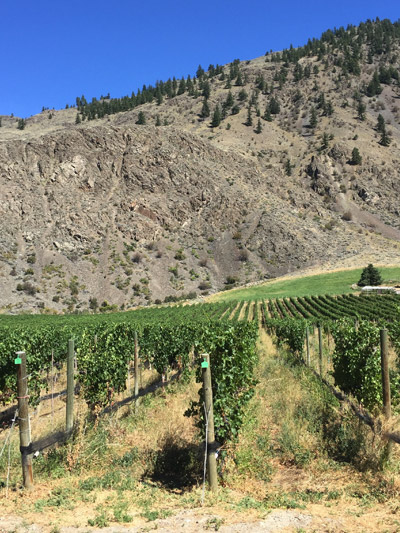 Roots_Vines_Inside_400_similkameen